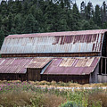 A Colorado Barn In Summer by Lynn Sprowl