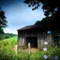 Barn N Flowers by David Gylland
