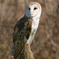Barn Owl 2 by Tracy Winter