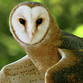 Barn Owl-6553 by Gary Gingrich Galleries