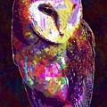 Barn Owl Bird British Nature  by PixBreak Art