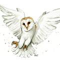 Barn Owl Flying Watercolor by Olga Shvartsur