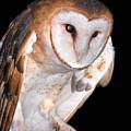 Barn Owl by Jean Noren