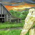 Barn Owl by Judy Hatlen