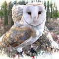 Barn Owl Magic by Brenda Kean