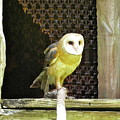 Barn Owl On The Prowl by Maureen Beaudet