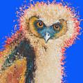 Barn Owl Painting by Jan Matson