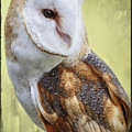 Barn Owl Portrait by Wes and Dotty Weber