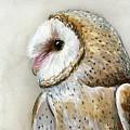 Barn Owl Watercolor by Olga Shvartsur