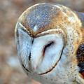 Barn Owle 1 by Marty Koch