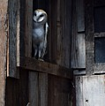Barn Owl......i See You. by Jimmy Chuck Smith