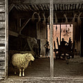 Barn Stock by Diana Angstadt