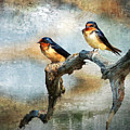Barn Swallows Oil by Scott Fracasso