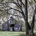 Barn Underneath The Tree by Terri Morris