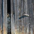 Barn Wall by Philip LeVee