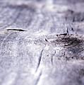 Barn Wood Abstract by Kurt Shaffer