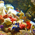 Barnacles And Sea Urchin Among Invertebrates In Monterey Aquarium-california  by Ruth Hager
