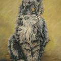 Barnhardt's Cat by Cheryl Pass