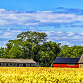 Barns In The Distance by Roberta Bragan