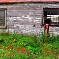 Barnside Flowers by Mark Lemon