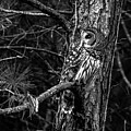 Barred In Black And White by Alicia Collins