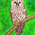 Barred Owl 08-18-2015 by John Smith