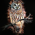 Barred Owl  by Artful Oasis