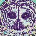 Barred Owl by Clarissa Hallmark