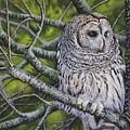 Barred Owl by Greg and Linda Halom