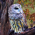 Barred Owl In The Rain Oil Painting by Elaine Plesser