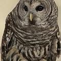 Barred Owl by Michael Gordon