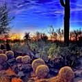 Barrel Cacti Ambling Along by Thomas Patterson