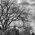 Winter In Cheesman Park, Denver, Co Empty Trees And Empty Benches by Philip Rodgers
