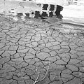 Barren Dry Land by Vineta Marinovic