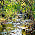 Barren Fork Creek by Terry Anderson