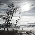 Barren Land by Peter Olsen