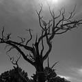 Barren Soul by Brendon Bradley
