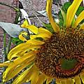 Barrio Sunflower 3 by Sarah Loft