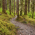 Bartlett Trails by Kristopher Schoenleber