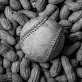 Baseball And Peanuts Black And White Square  by Terry DeLuco