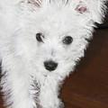 Bashful Puppy by Terri Waters