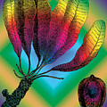 Basia Plant by Eric Edelman