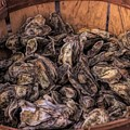 Basket Full Of Oysters by Paulette Thomas