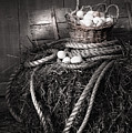 Basket Of Eggs On A Bale Of Hay by Sandra Cunningham