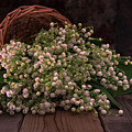 Basket Of Fresh Lily Of The Valley Flowers by Jaroslaw Blaminsky