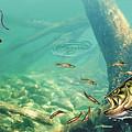 Bass Pond by Jon Wright