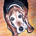Basset Hound  by Patricia L Davidson