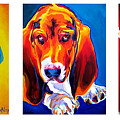 Basset Trio by Alicia VanNoy Call