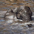 Bath Time - African Elephant In The Water by Elizabeth Rieke Hefley