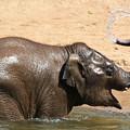 Bath Time At Dublin Zoo by Martina Fagan